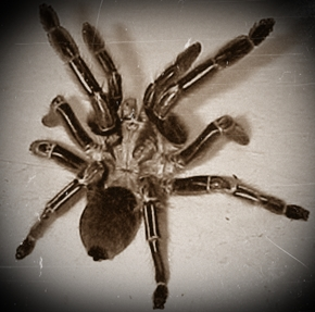 arachnophobia is the fear of spiders english literature essay Arachnophobia, the irrational fear of spiders, is one of the most common types of phobias  arachnophobia: definition, treatment & symptoms related study materials  650 english language .